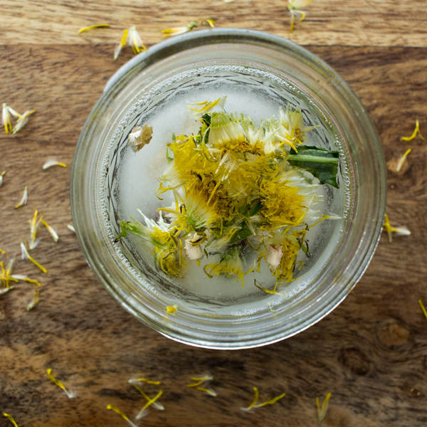 FREE Dandelion Lotion Recipe