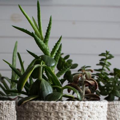 Plants After Transplant