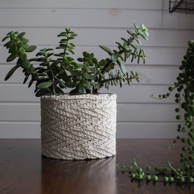 Jade Plant After Transplant